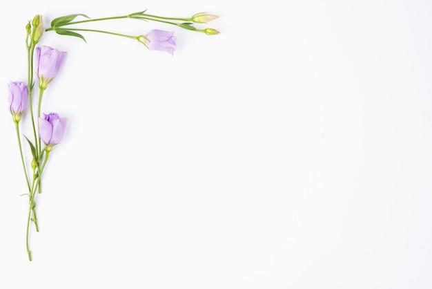 Kwiaty bzu graniczące z rogiem
