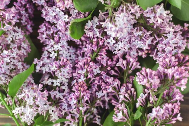 Kwiaty bzu, wiosenne kwiaty z kwitnącymi kwiatami bzu