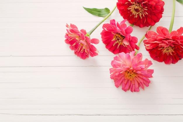 Kwiaty cynia