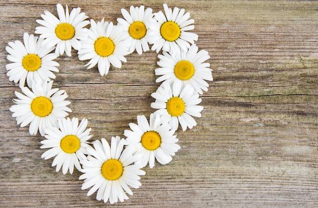 Kwiaty daisy w kształcie serca
