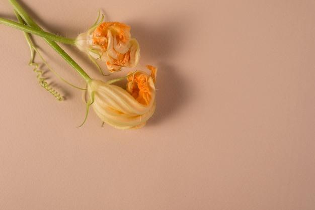 Kwiaty dyni wycięte z ogrodu płasko leżały w tle kwiatowym z pustym miejscem na tekst