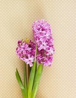 Kwiaty fioletowego hiacyntu