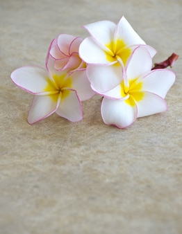 Kwiaty frangipani na tle marmuru