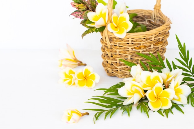 Kwiaty frangipani w aranżacji koszykowej w stylu pocztówki