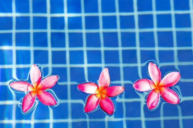 Kwiaty frangipani w basenie