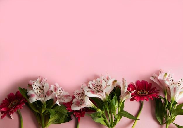 Kwiaty gerbera i alstroemeria ułożone w rzędzie na różowym tle.