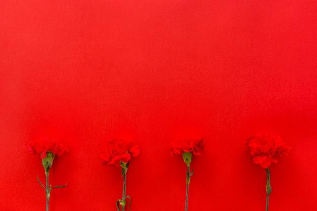 Kwiaty goździków ułożone na dole czerwonego tła
