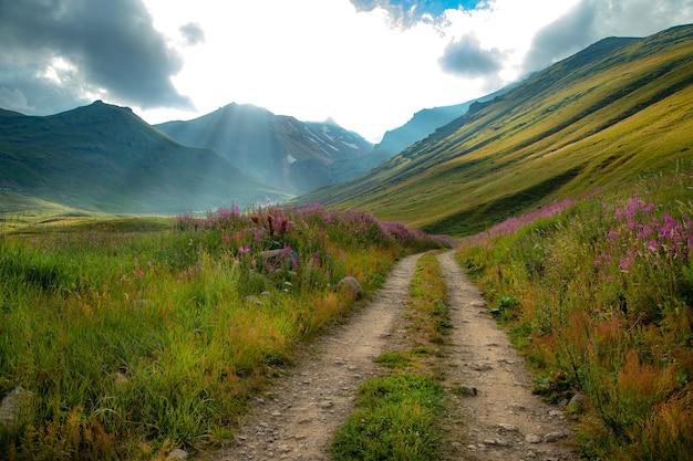 Kwiaty i droga w krajobrazie górskim