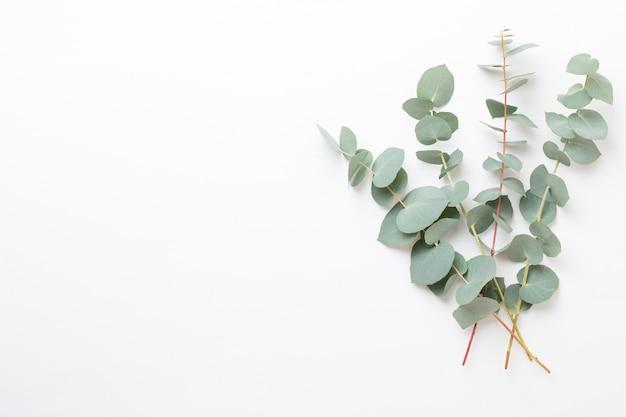 Kwiaty i kompozycja eucaaliptus. wzór wykonany z różnych kolorowych kwiatów na białym tle. mieszkanie leżało do końca życia.