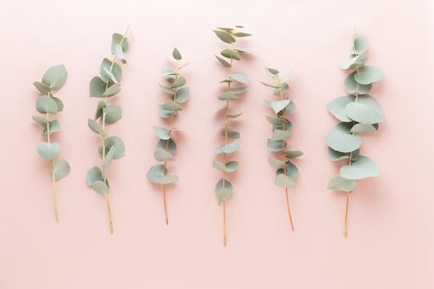 Kwiaty i kompozycja eucaaliptus. wzór wykonany z różnych kolorowych kwiatów na białym tle.