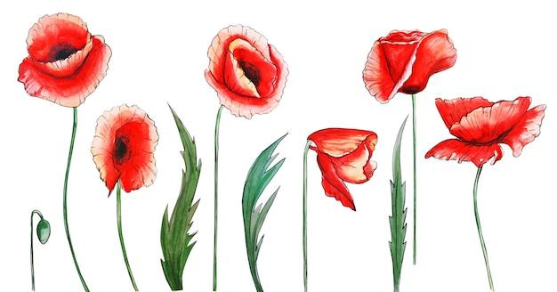 Kwiaty i liście, akwarela maki. ilustracje akwarela