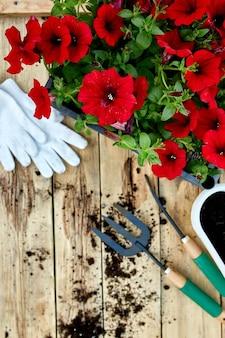 Kwiaty i narzędzia ogrodnicze na podłoże drewniane. petunia w koszu i sprzęt ogrodowy. wiosenny ogród działa koncepcja. leżał na płasko, kopia przestrzeń, ramka.