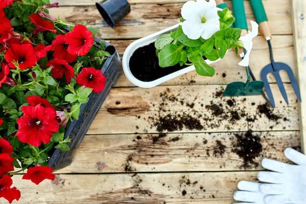 Kwiaty i narzędzia ogrodnicze na podłoże drewniane. petunia w koszu i sprzęt ogrodowy. wiosenny ogród działa koncepcja.