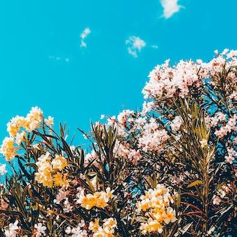 Kwiaty i niebo. minimalistyczny styl
