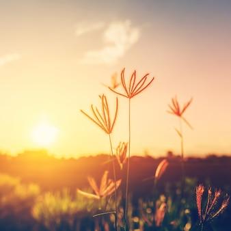 Kwiaty I Rośliny W Zachodzie Słońca Premium Zdjęcia