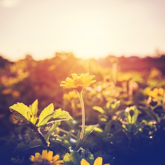 Kwiaty i rośliny w zachodzie słońca