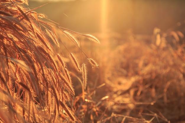 Kwiaty i trawa z zachodem słońca