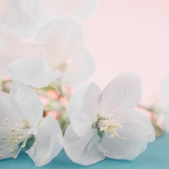 Kwiaty jabłoni nad niewyraźnym kolorem