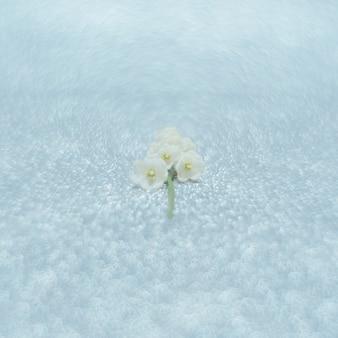 Kwiaty konwalii z bliska z selektywnym skupieniem się na jasnym srebrnym tle piękno