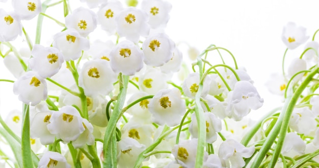 Kwiaty konwalii z bliska