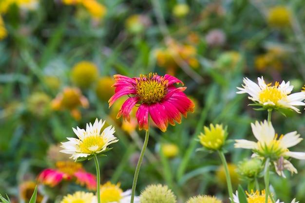 Kwiaty kwitnące w ciągu dnia