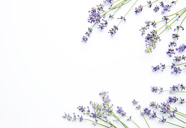 Kwiaty lawendy na białej powierzchni. kwiaty leżały płasko, widok z góry.