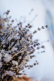 Kwiaty lawendy na białym tle makieta