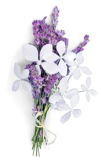 Kwiaty lawendy na białym tle