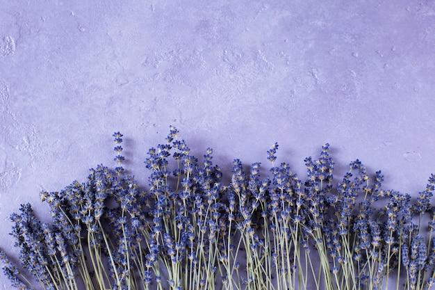Kwiaty lawendy na fioletowo