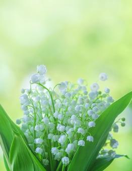 Kwiaty lilly of the valley zamykają up na zielonym bokeh