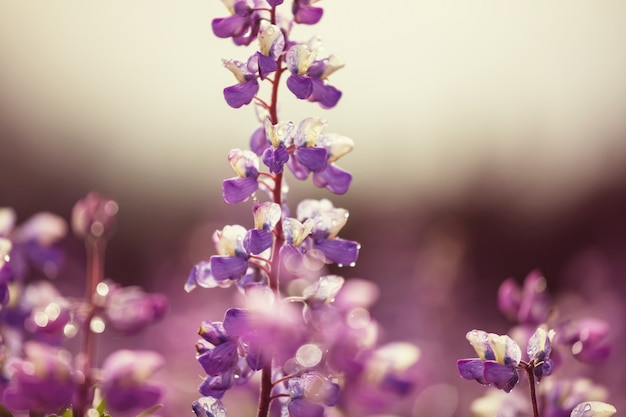 Kwiaty na alasce