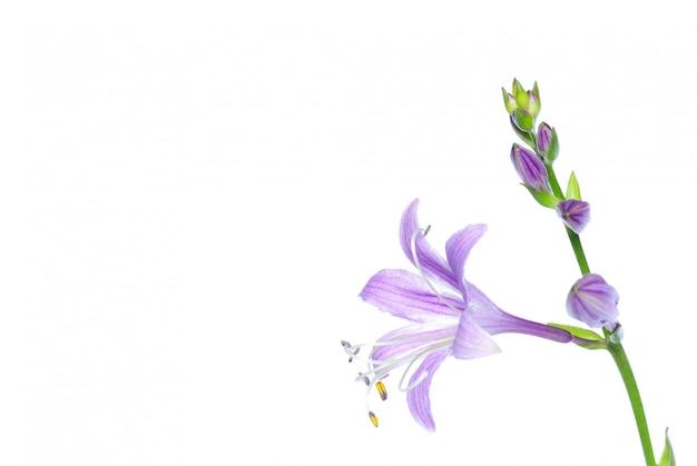 Kwiaty na białym tle