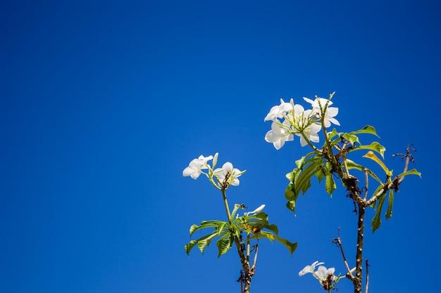 Kwiaty na drzewie.