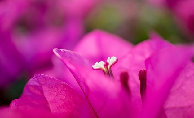 Kwiaty na krzaku na letnim tarasie w ogrodzie