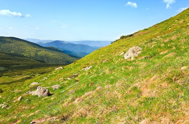 Kwiaty na letnim zboczu góry (ukraina, karpaty)