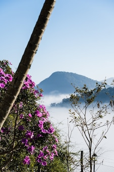 Kwiaty na pierwszym planie z dużą ilością mgły i chmur zasłaniają widok na miasto