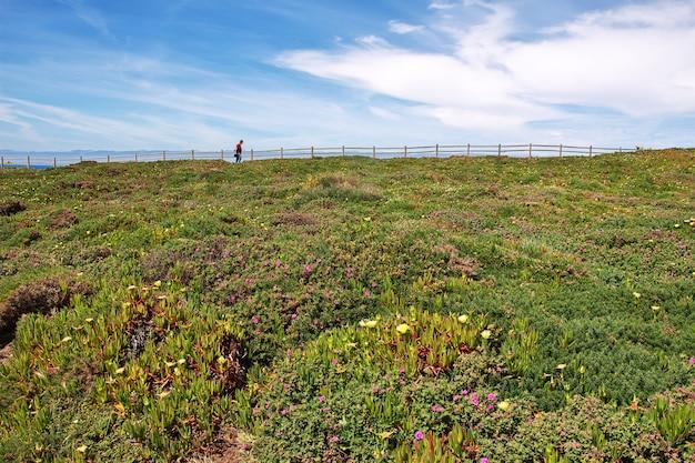 Kwiaty na przylądku roca na oceanie atlantyckim, portugalia