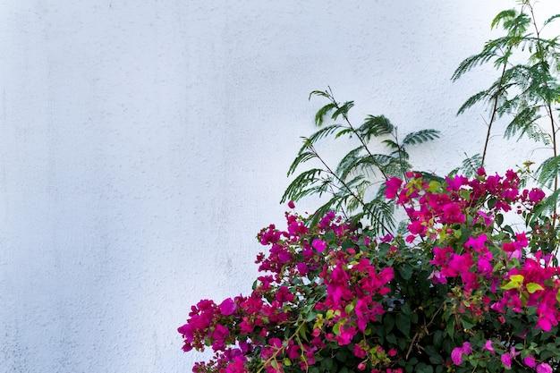 Kwiaty na pustej kamiennej ścianie i brukowanej ulicy