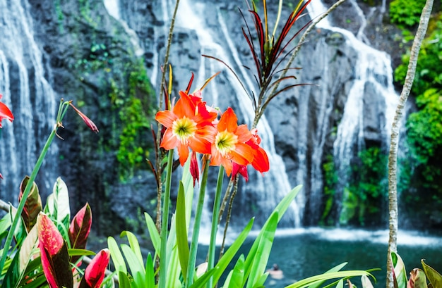 Kwiaty na tle wodospadu. hippeastrum kwiatowe na tle wodospadu banyumala z kaskadami wśród zielonych drzew tropikalnych i roślin na północy wyspy bali