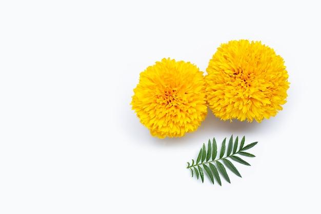 Kwiaty nagietka z liści na białym tle. skopiuj miejsce
