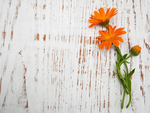Kwiaty nagietka