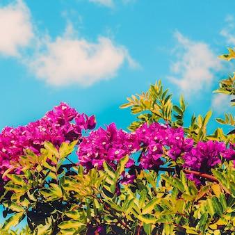 Kwiaty natura wyspy kanaryjskie