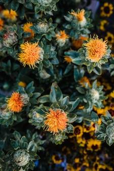Kwiaty o pomarańczowych płatkach