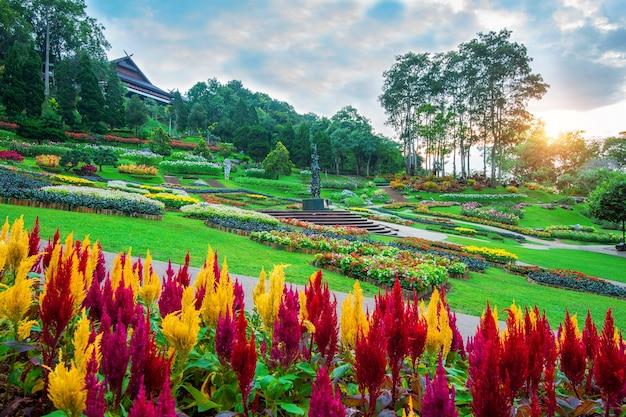 Kwiaty ogrodowe, ogród mae fah luang zlokalizuj na doi tung w chiang rai w tajlandii.