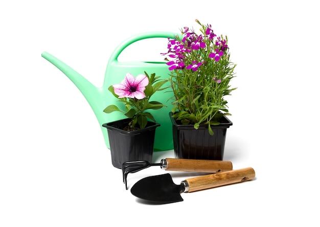Kwiaty ogrodowe, petunie, lobelia i sprzęt ogrodniczy oraz konewki na białym tle