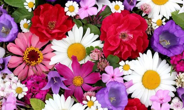 Kwiaty ogrodowe w tle: stokrotka, róża i koniczyna. zasłona