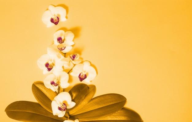 Kwiaty orchidei i zielone liście na pomarańczowym tle
