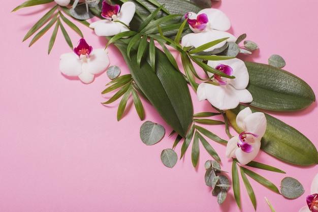 Kwiaty orchidei i zielonych liści na różowym tle papieru