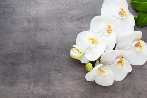 Kwiaty orchidei na kamiennym tle