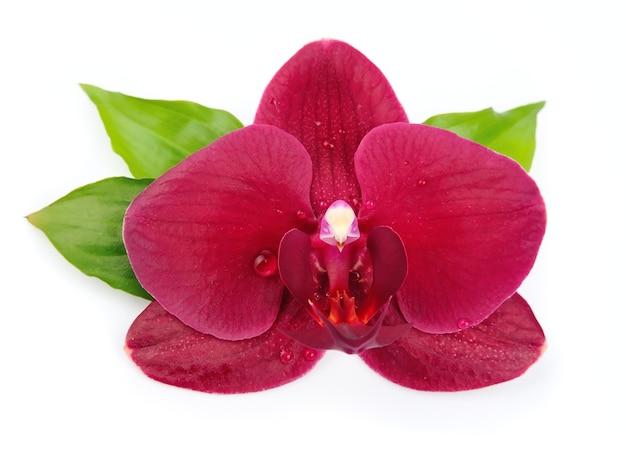 Kwiaty orchidei z bliska na białym tle